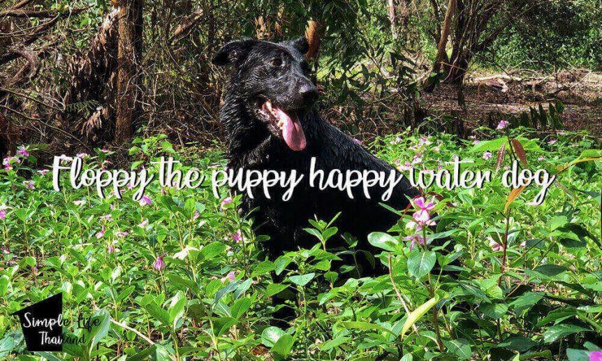 Floppy the puppy happy water dog